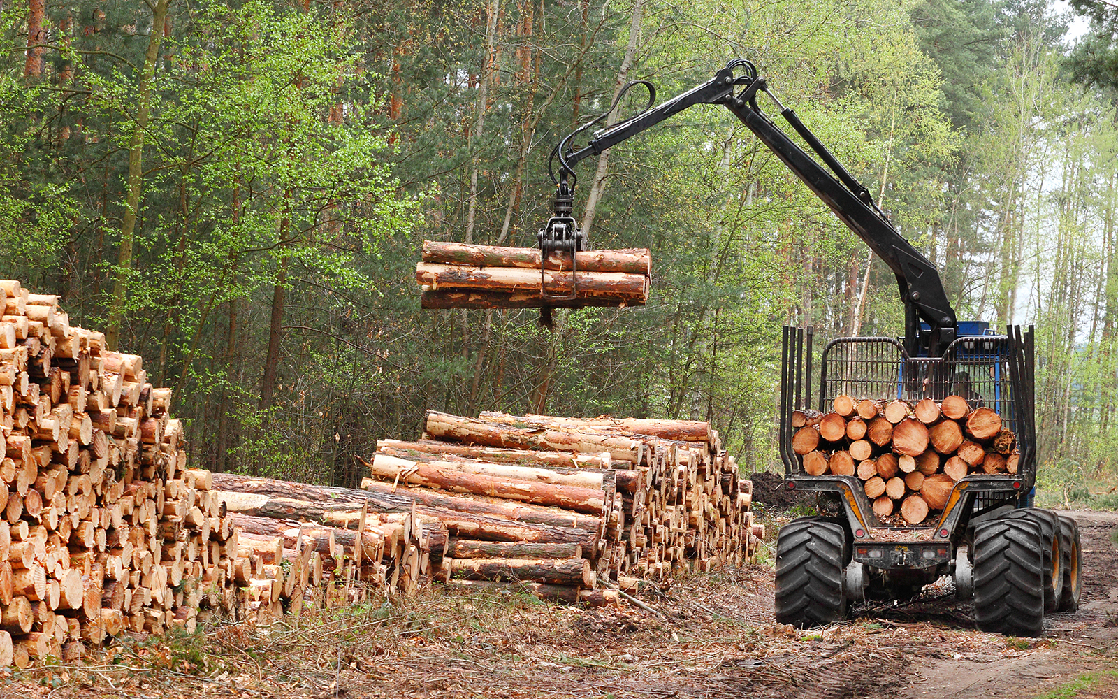 Stacks of logs at a forest logging site