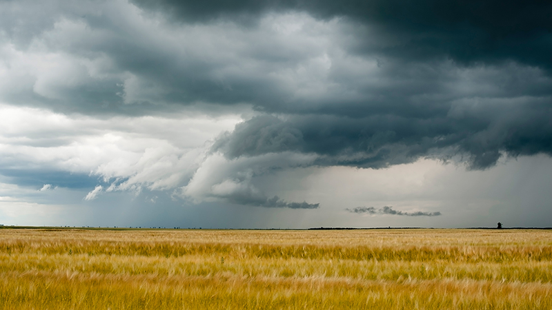 stormy field of crops